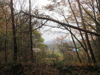 初時雨 - 宮迫の! ようこそヤマボウシの森へ
