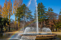 公園の秋 - デジカメ写真集