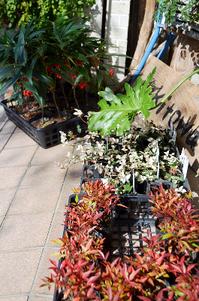 12月の盆栽ワークショップご案内 - Kitowaの日々