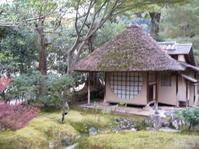 京都紅葉彩々 - 花の自由旋律