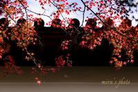 紅葉そのものの美しさ。 - MIRU'S PHOTO