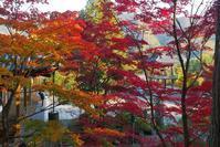 この紅葉を見ずして・・・桐生・崇禅寺の紅葉こそ♪ - 『私のデジタル写真眼』