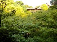 東福寺の紅葉 - 黄色い電車に乗せて…