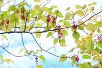 木の実と花 - 暮らしの中で