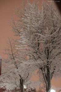 11月ですが、すでに冬です。 - x1倶楽部