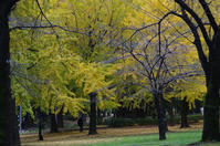 都立赤塚公園  紅葉盛り - 東京雑派  TOKYO ZAPPA
