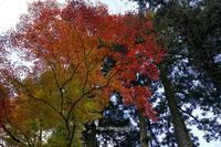 紅葉狩り - ショーオヤジのひとり言
