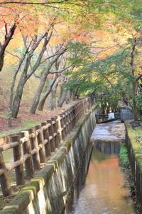 長田谷津と市川霊園 - 月に叢雲 花に嵐