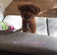 「コラボレッスン致しました」 - 世田谷区羽根木 東松原の小さなお花の教室   「森のアトリエ  pommes de pin」
