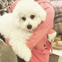 Hello ぽんぽん !! - Doggie Do!! / good dog and hello cat !!