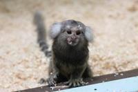 千葉市動物公園~動物科学館の赤様たち - 続々・動物園ありマス。