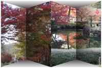紅葉満喫 in 近水園 - ひとりあそび