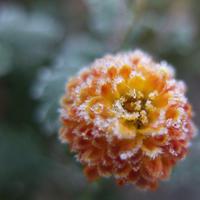 白湯一椀(小雪) - ポケットに季節の手帖