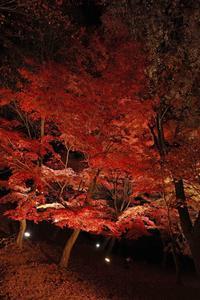 最上山公園(もみじ祭り)←つづきのつづき - ファインダーの中に惹かれて