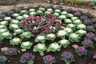 冬花壇への植え替え2017年秋(11月) - ニッキーののんびり気まま暮らし