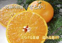 究極の柑橘「せとか」寒さを感じさせ、冬の到来に向けハウスにビニールをはり、今年も順調に成長中! - FLCパートナーズストア