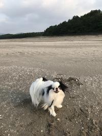 鹿児島の照島海岸を満喫する瑠璃っペ - 白黒きんぎょの3狆ごよみ