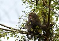 お山のお猿さん - 旅のかほり