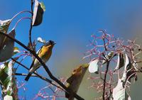 10月の思い出 - 今日も鳥撮り