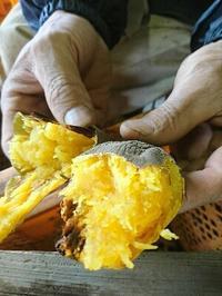 今日のお芋 - 山脇農園ブログ