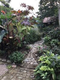 9月の庭 - mosquitogarden