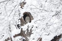 雪の中で、ふくろう - ☆魔法使いの部屋☆