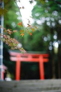 秋色....『始めました・・2』 - 気ままに写生活