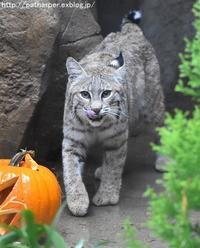2017年10月 王子動物園 その2 ハロウィンイベント - ハープの徒然草