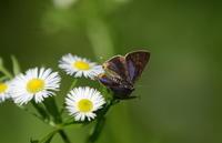 今年を振り返ってその1 - 紀州里山の蝶たち