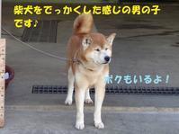 センター訪問(その5:里親さん&預かりさん募集中の子たち) - もももの部屋(家族を待っている保護犬たちと我家の愛犬のブログです)