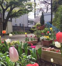 臨時入園説明会のお知らせ - シュタイナー幼稚園  NPO法人すみれの庭