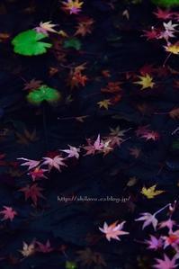 万博記念公園の紅葉 - 白雪ばぁばのかんづめ