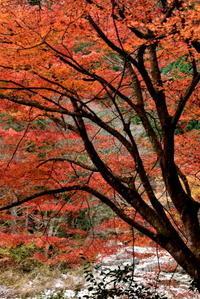 鳥取大山(だいせん) - 高原に行きたい