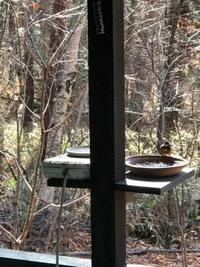 木洩れ日亭 - 木洩れ日の森から