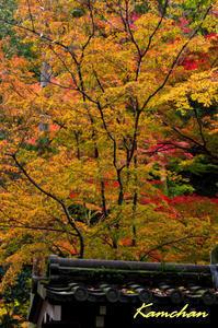 今熊野観音寺へ - カンちゃんの写真いろいろ