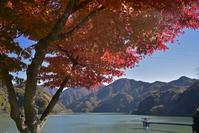 2017年11月25日、丹沢湖の紅葉 - バリ島大好き