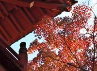 秋満喫。。。 - □ □ nuku-nuku □ □
