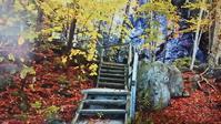 残り少ない秋 - 信仙のブログ