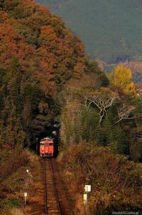 木々のトンネルを抜けて。 - My favorite Photo book