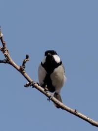 見沼自然公園にいた小鳥 - コーヒー党の野鳥と自然 パート2