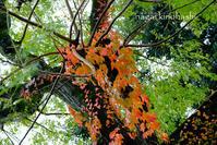 雨上がりにご近所写ん歩 - 長い木の橋