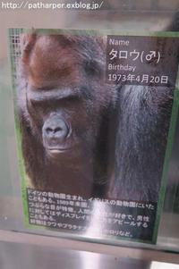2017年11月日本モンキーセンターその2類人猿 - ハープの徒然草