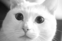 瞳に映るは… - Omoブログ