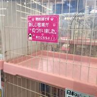パグ - ちょんまげブログ