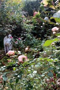 我が家の庭のバラ - バラとハーブのある暮らし Salon de Roses