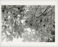 Leaves 2 - Mon's cafe