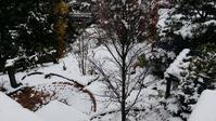 初雪が降りました。 - 今から・花