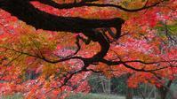 森林公園の紅葉狩り枝ぶり探し何処をボカすのか・・・ - 『私のデジタル写真眼』