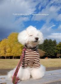 おじいちゃんの - *** life is beautiful ***