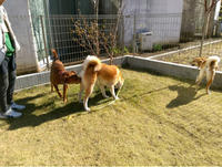ものすごーい安心感と絆 - 犬との穏やかな日々